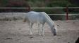 اسب سواری