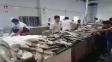 بازار ماهی کیش
