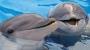 پارک دلفین ها و باغ پرندگان
