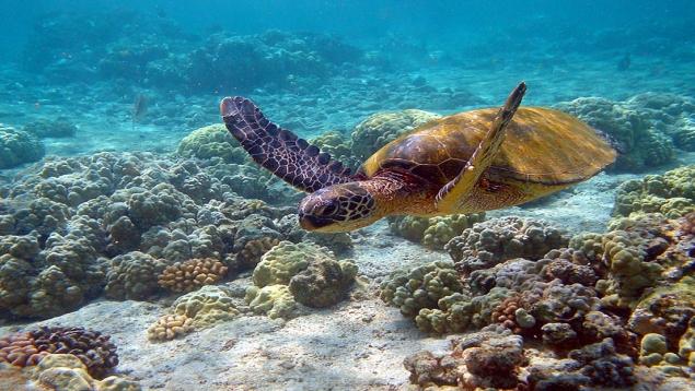 لاک پشت های دریایی
