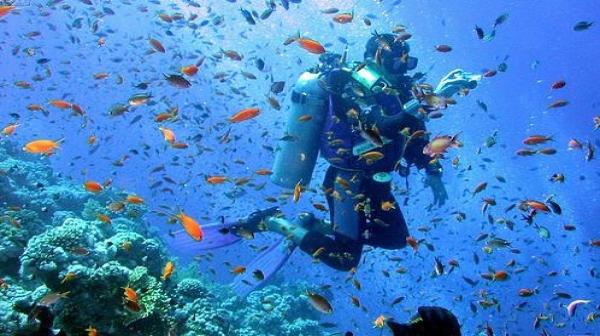 غواصی های تفریحی غیر تخصصی از عوامل تخریب مرجان ها هستند