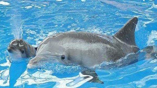 دلفیناریوم کیش رکوردار میزان زایش دلفین در محیط بسته درجهان