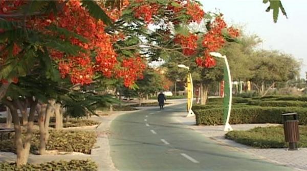 مدیر خدمات شهری کیش اعلام کرد؛ احداث جنگل 100 هکتاری با گونه های گیاهی مناسب اقلیمی در کیش