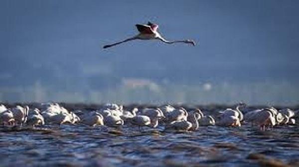 حضور پرندگان مهاجر در جزیره کیش