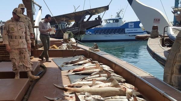 کشف ۷ تن ماهی از دو لنج غیرمجاز صیادی در جزیره کیش