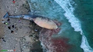 دفن لاشه یک نهنگ به گل نشسته در ساحل سیمرغ کیش